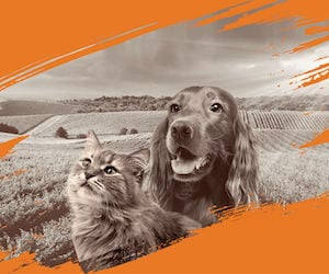 Nature's Variety chiens et chats